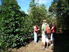 Auf der Kaffee Plantage in Boquete