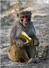 Day 7: Monkey eat now.