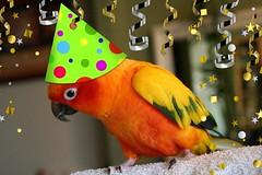 Stewie's Party