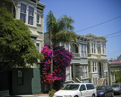 bougainvillea and Edwardians of Noe Valley