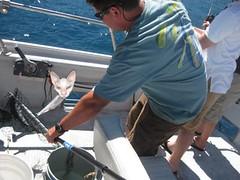 Catching a Kitten Fish