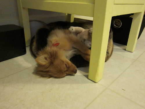 Tender Pup