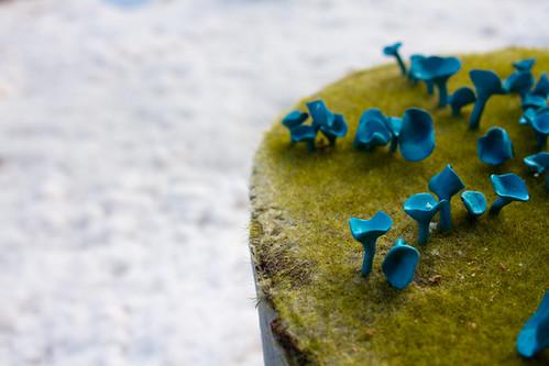 weird mushroom in the field of snow
