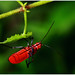 """Acrobatic Bug • <a style=""""font-size:0.8em;"""" href=""""http://www.flickr.com/photos/8038254@N06/4873491577/"""" target=""""_blank"""">View on Flickr</a>"""