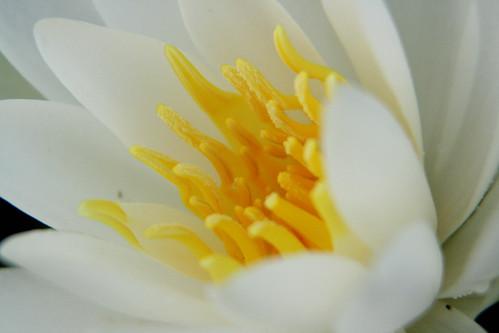 365-234 Lily Macro