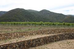 La Serenissima Vineyard
