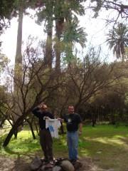En Las Palmas de Ocoa