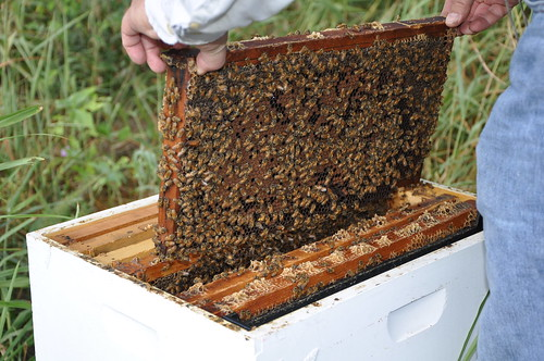 Healthy hives