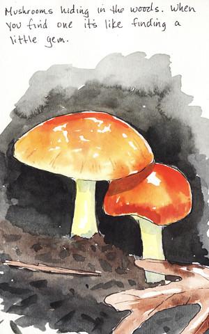 20100627_mushroom2