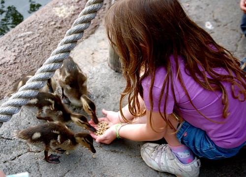 Caitlin Feeds the Ducklings