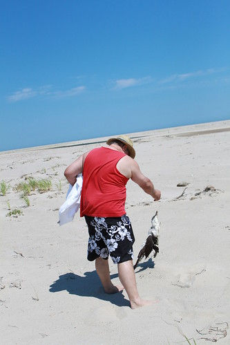 Cape Cod - Chatham Bars Inn - North Shore - Timmy Discovers Why Seagull is Dead