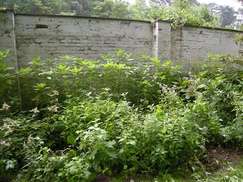An der Gartenmauer