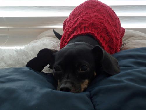 dog sweater 5