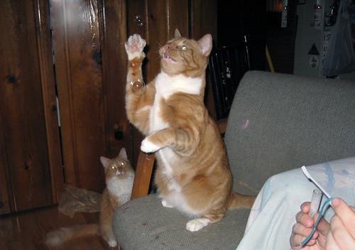 20100710 - cats vs. bubbles - 1 - Oranjello, Lemonjello - looking evil - 037