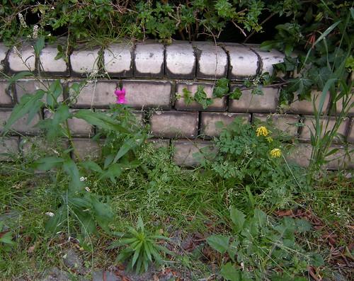 An Mauern hin 2