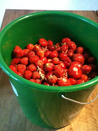 Erdbeeren satt