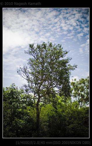 A tree grows in Devarayanadurga