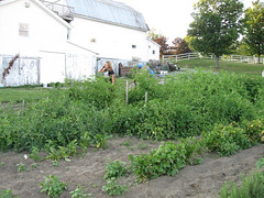 garden-serioustomatopatch