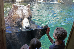 grizzly bear mind meld with boy