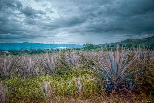 Campo de Agaves, Hacienda la Cofradia