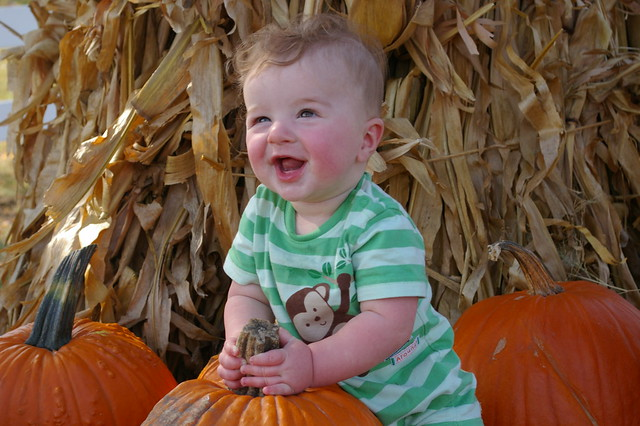 pumpkin patch 090