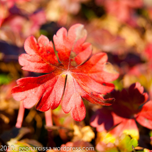 arboretum, autumn, november, ontario, ottawa6.jpg