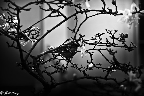 oh little sparrow by Matt Hovey