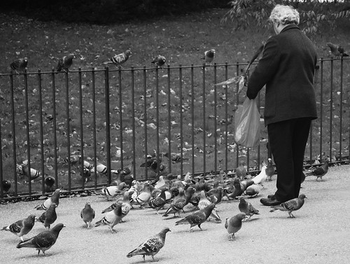 Feeding the Birds 2