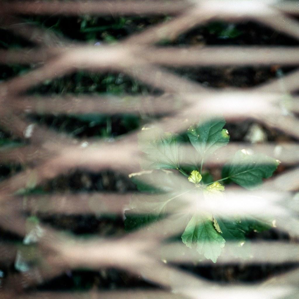 plant below a grate in the sidewalk