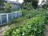 Garden July 2010