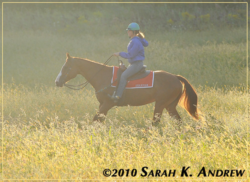 Morning Commute: a pony rider on her way to Saratoga Race Course