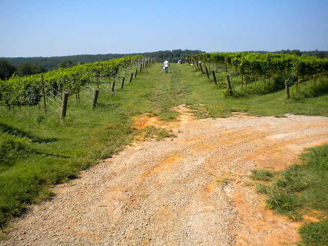 Georgia Wine Country