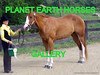PLANET EARTH HORSES group gallery. Showcase galleries on display in PLANET EARTH NEWSLETTER.
