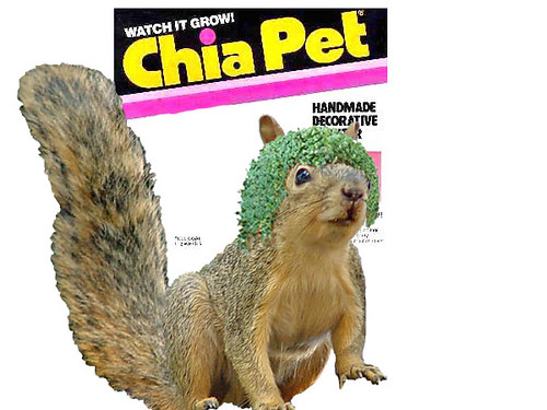 chia squirrel