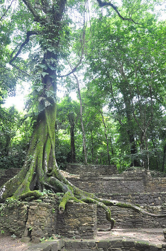 Palenque ruins overgrown