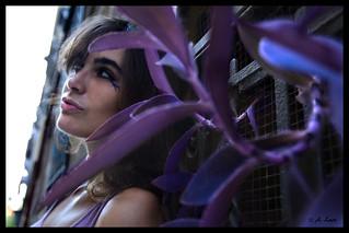 Fusión Violeta