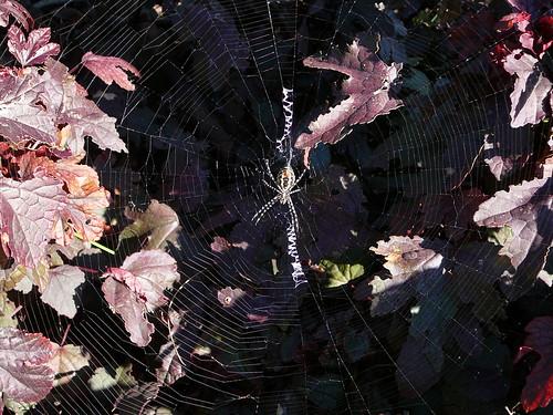 October spider!