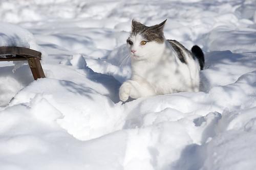 Natura Selvaggia: Il puma delle nevi della Val Casìes