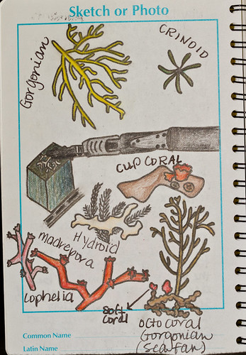 Illustration of various corals