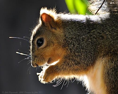 Sunlit Squirrel