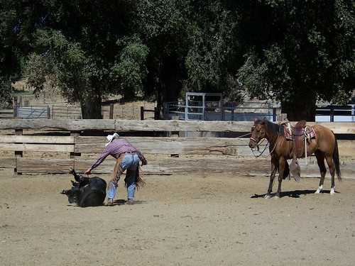 ranch roping #4.9.2010