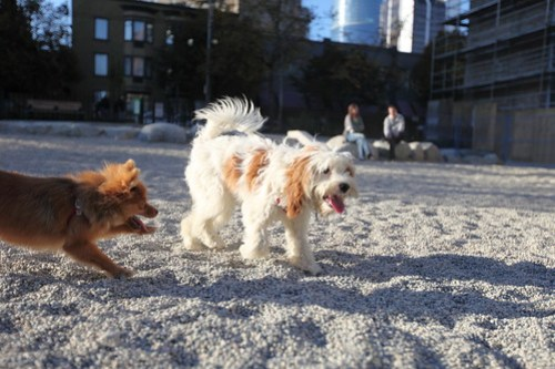 A day in the Dog Park
