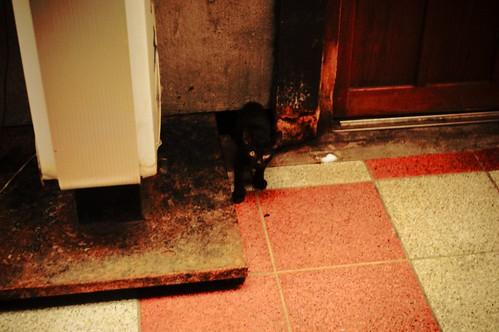 黒猫ちゃん。おはよう。