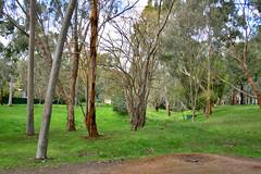 Gum-filled Park