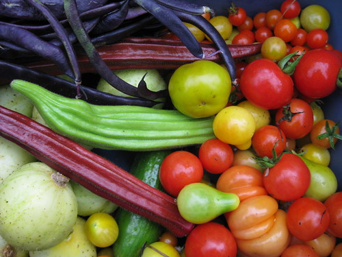 a festival of vegetable colours