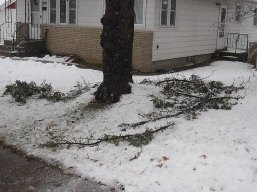 scary branches finally fell
