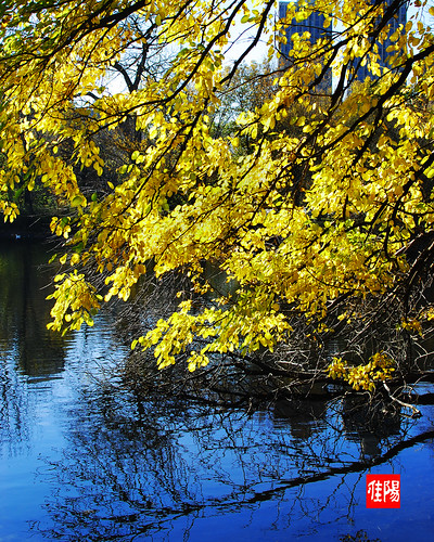 D80-CHI_AutumnLeaves04-2010_10-29B