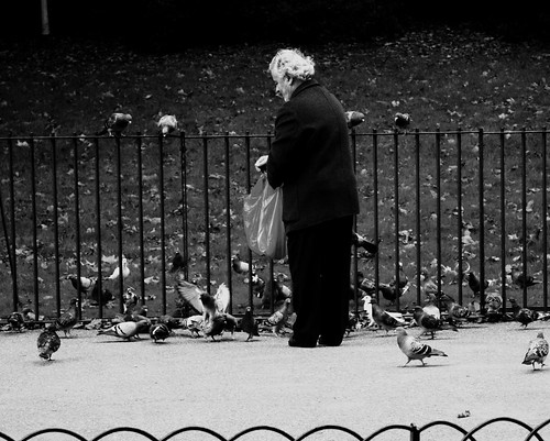 Feeding the Birds 1