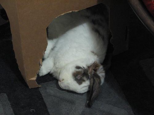 betsy sleeping very peacefully