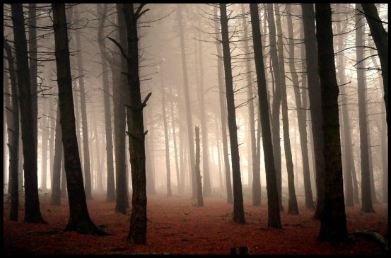 Untitled by reaspring (Lickey Hills)